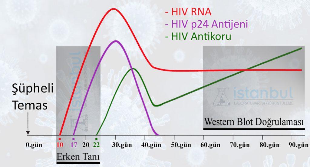 Aids Testi Ne Zaman Yaptirilmali Istanbul Laboratuvarlari